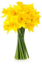 Bouquet Of Yellow Daffodils Sticker