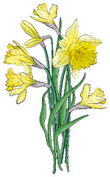 Bouquet Of Yellow Narcissus With Green Leaves Sticker