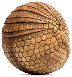 Brazilian Three-banded Armadillo Rolled Up In Ball Sticker