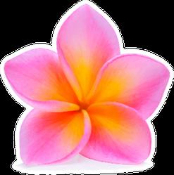Bright Pink Plumeria Flower Sticker