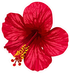 Bright Red Hibiscus Sticker
