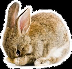 Brown Baby Bunny Sticker