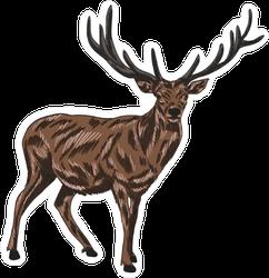 Brown Deer Illustration Sticker