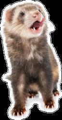 Brown Ferret Mouth Open Sticker