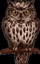 Brown Owl Bird Sketch Sticker