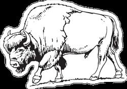Buffalo American Bison Illustration Sticker