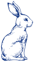 Bunny Cute Rabbit Animal Ink Hand Drawn Sticker