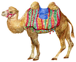 Camel Isolated Watercolor Sticker
