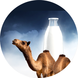 Camel Milk Illustration Sticker