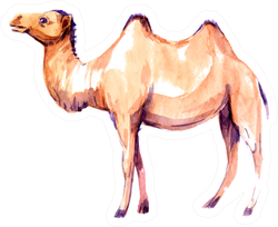 Camel. Watercolor Illustration Sticker