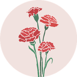 Carnation Flowers Illustration With Color Background Sticker