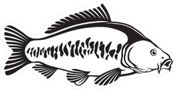 Carp Illustration Sticker