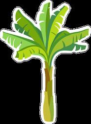 Cartoon Banana Palm Tree Sticker