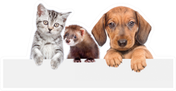 Cat, Dog And Ferret Over White Banner Sticker