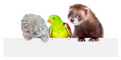 Cat, Ferret And Parrot Look Together Sticker