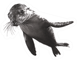 Charcoal Painting Of Sea Lion On Paper Sticker