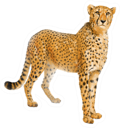 Cheetah Color Pencil Drawing Sticker