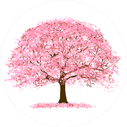 Cherry Blossoms Tree In Spring Sticker