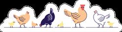 Chickens Illustration Multicolor Chicks Standing Sticker