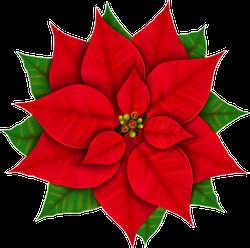 Christmas Poinsettia Sticker