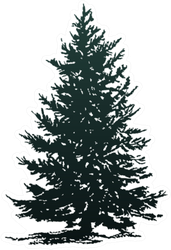 Christmas Tree Silhouette Sticker Little bit of calm and crazy. christmas tree silhouette sticker