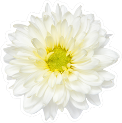 Chrysanthemum Top View Sticker