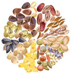 Circle Of Seeds Sticker