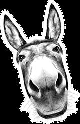 Close Up Donkey Head Sticker
