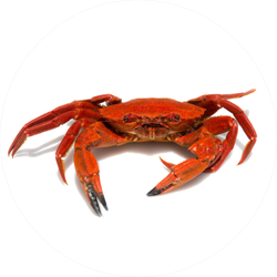 Close-up Of A Galician Velvet Crab Sticker