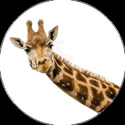 Close Up Shot Of Giraffe Head Sticker
