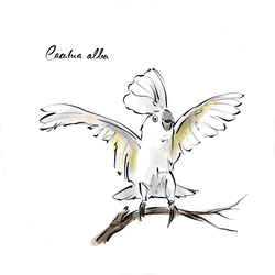 Cockatoo Hand Drawn Graphic Bird Cacatua Alba Sticker
