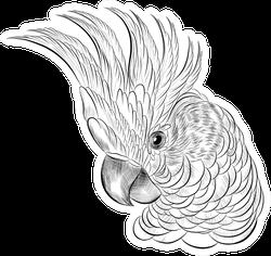 Cockatoo Parrot Head Coloring Sketch Sticker