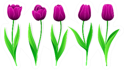 Collection Of Purple Tulips With Stem Sticker
