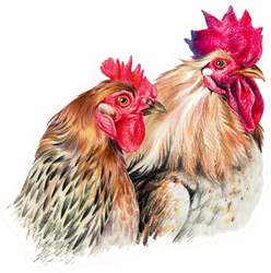 Color Drawing With Watercolor Pencils Hen And Cock Sticker