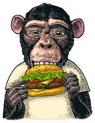 Color Monkey Eating A Hamburger Sticker