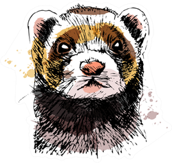 Colored Hand Sketch Head Of Ferret Sticker