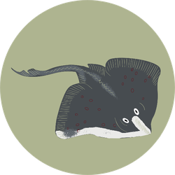 Colorful Cartoon Stingray Illustration In Green Sticker
