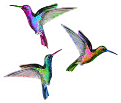 Colorful Hummingbirds Are Flying Sticker