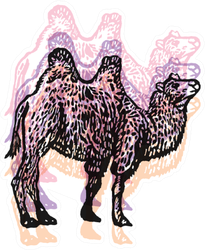 Colorful Illustration Of Bactrian Camel Sticker