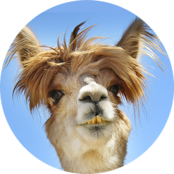 Colorful Photograph Of Funny Llama Sticker