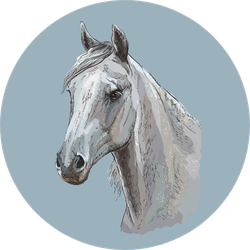Colorful Portrait Of White Arabian Horse On Blue Sticker