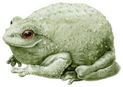 Common Cute Green Toad Or Frog Watercolor Illustration Sticker