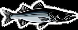 Common Snook Fish Sticker