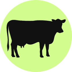 Cow Black Silhouette Illustration On Green Sticker