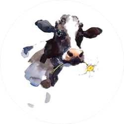 Cow Eating a Daisy Flower Sticker