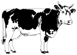Cow Illustration Sticker