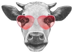 Cow In Love! Portrait Of Cow Sticker