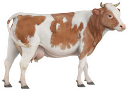 Cow Isolated On White Background Brown Spots Sticker