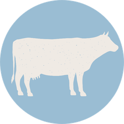 Cow Silhouette. Cow Icon Isolated On Blue Background Sticker