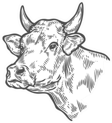 Cows Head. Hand Drawn Sketch In A Graphic Style Sticker